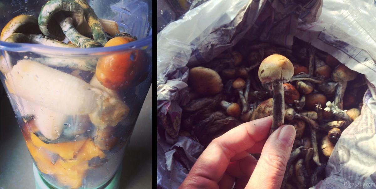 koh samui mushroom trip review
