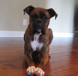soft paws for dogs reviews