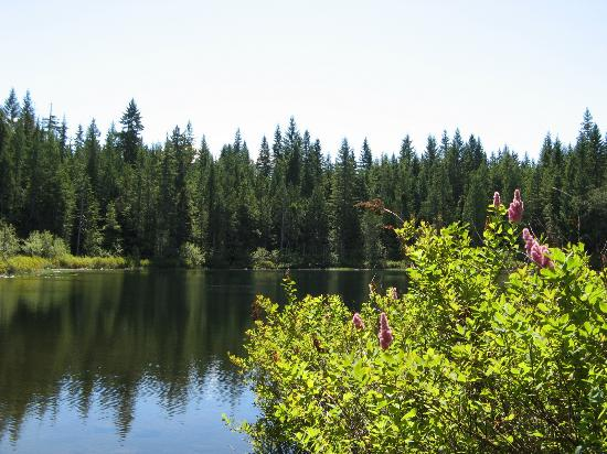 alice lake provincial park reviews