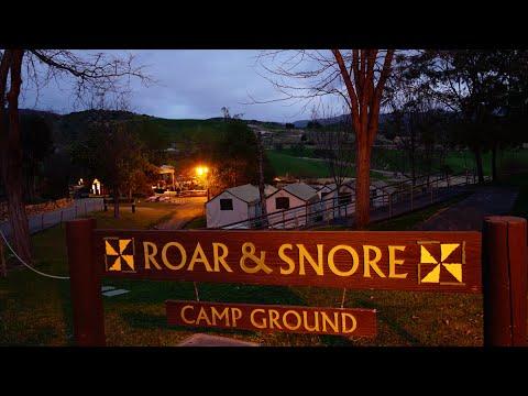 roar and snore safari review